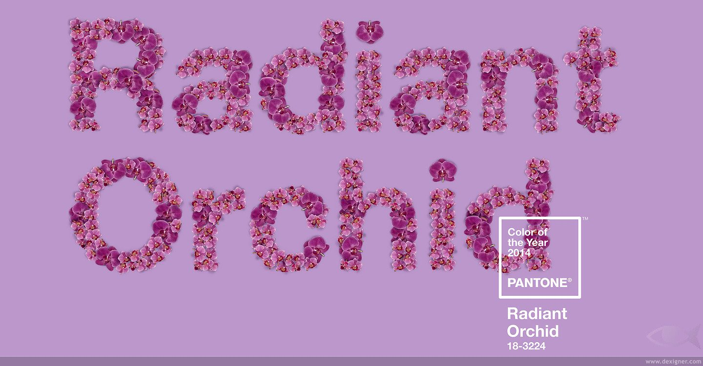 Radiant_Orchid_PANTONE_2014_Color_of_the_Year_03_gallery